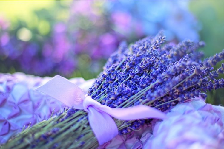 Lavender Benefits and General Uses