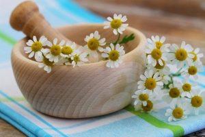 03 Plants to Relieve a Headache