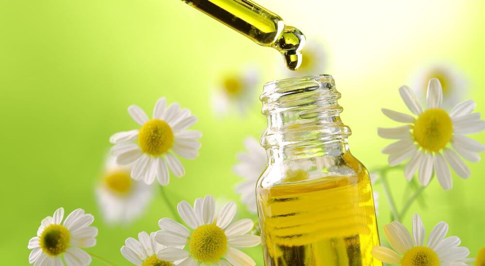 Top Uses and Benefits of Chamomile
