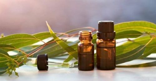 Everything You Should Know About Eucalyptus Essential Oil