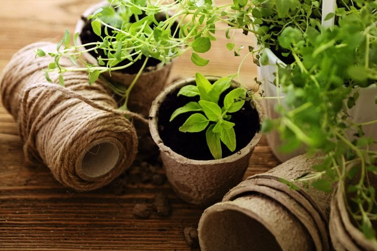 Understanding Botany for Aromatherapy What is a Hybrid Plant