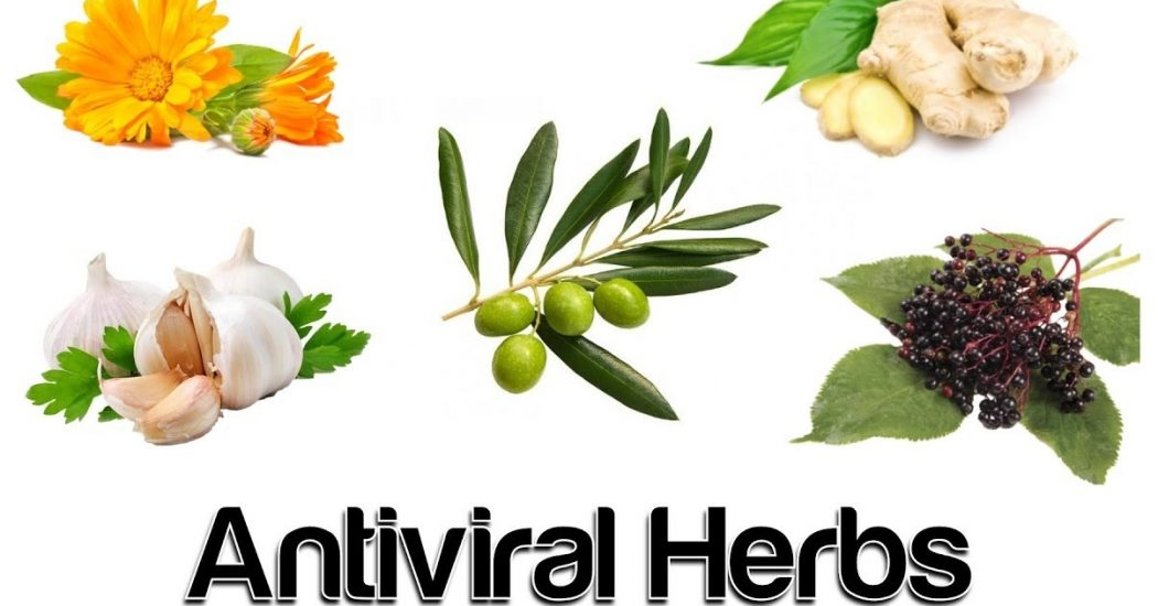 Natural Antiviral Herbs