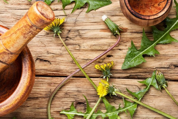 The Healing Power of Dandelion Herb