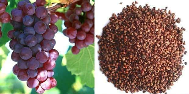 Don't Throw Away the Grape Seeds, It's a Treasure Trove of Benefits