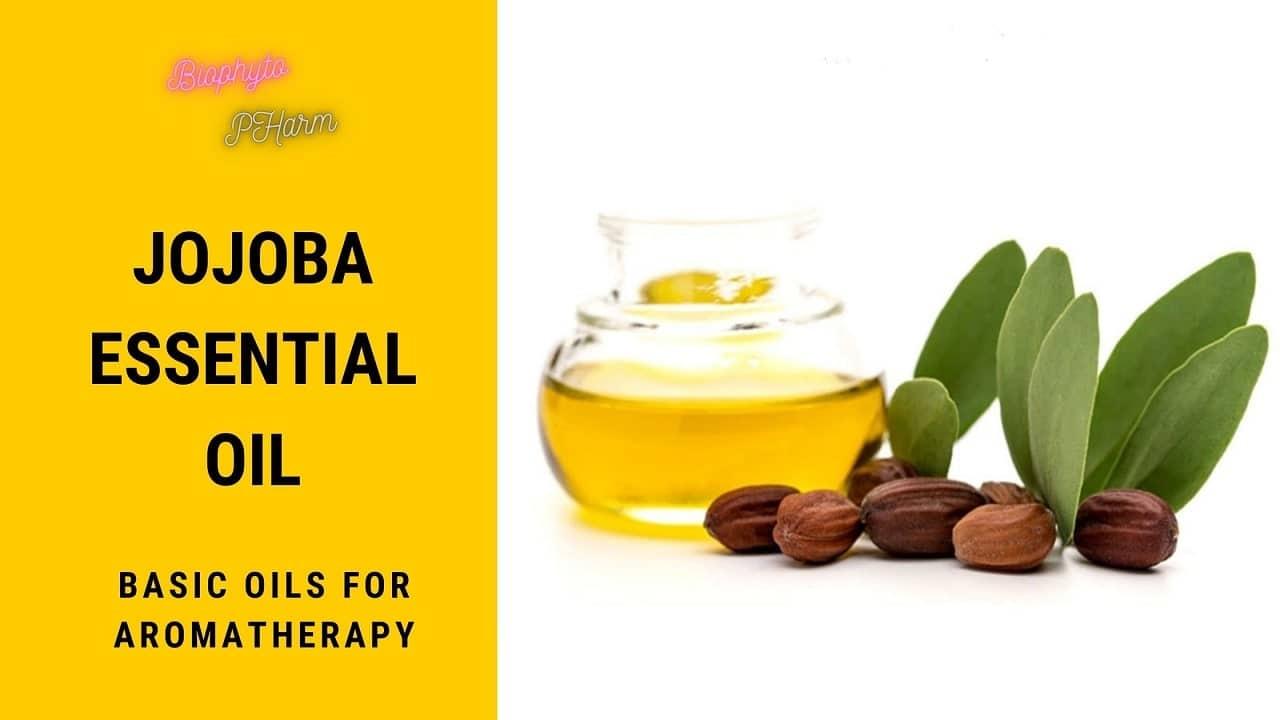 Jojoba Essential Oil Basic Oils for Aromatherapy
