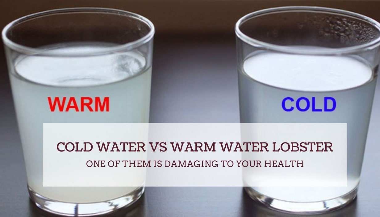 Cold Water vs Warm Water Lobster ONE OF THEM IS DAMAGING TO YOUR HEALTH