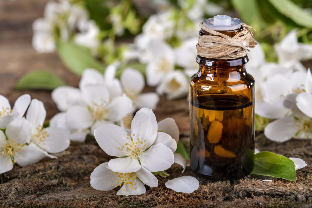 Best Jasmine Essential Oil Benefits and Uses