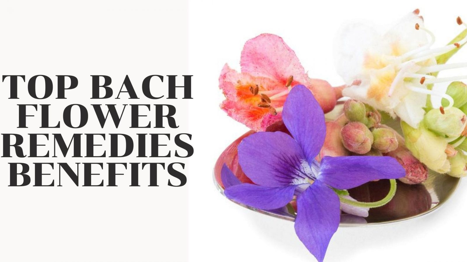 Top Bach Flower Remedies Benefits