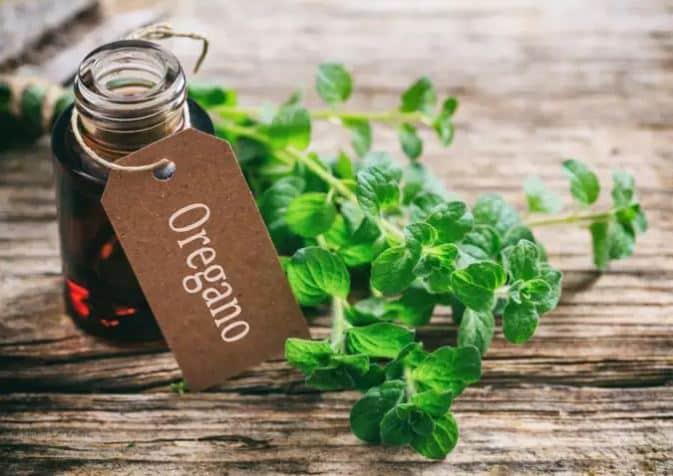 Oregano Essential Oil Benefits and Tips on Using Oregano Oil