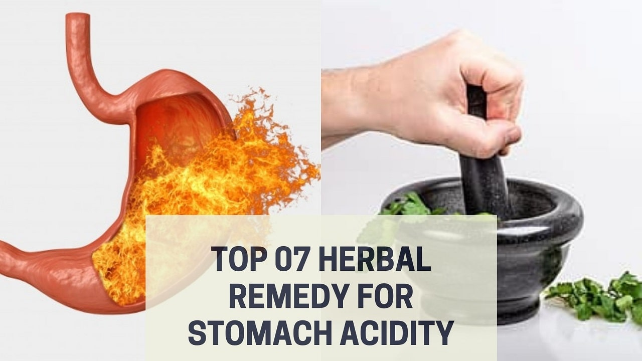 Top 07 Herbal Remedy for Stomach Acidity
