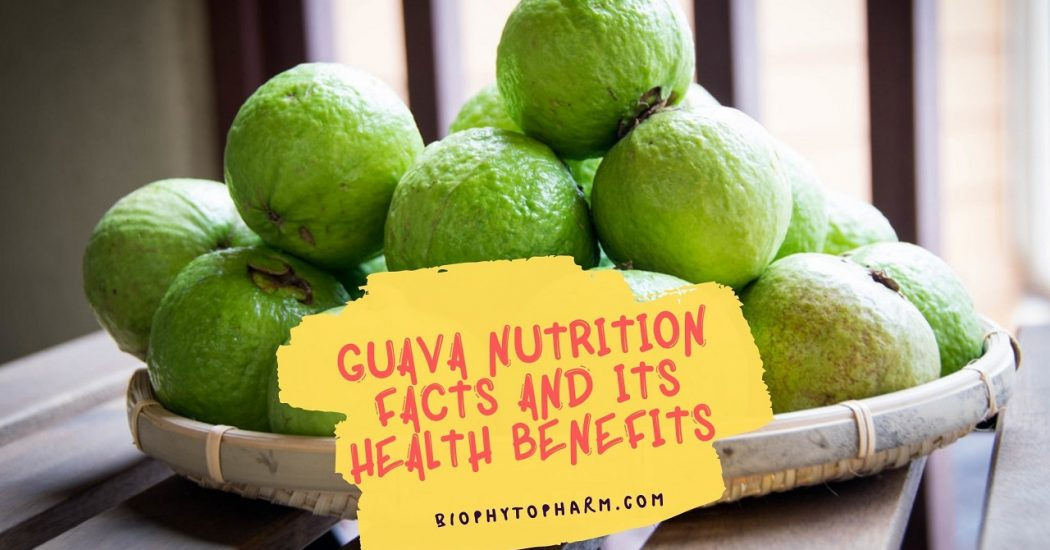 Guava Nutrition Facts And Its Health Benefits