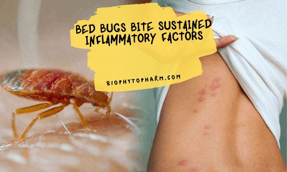 Bed Bugs Bite Sustained Inflammatory Factors